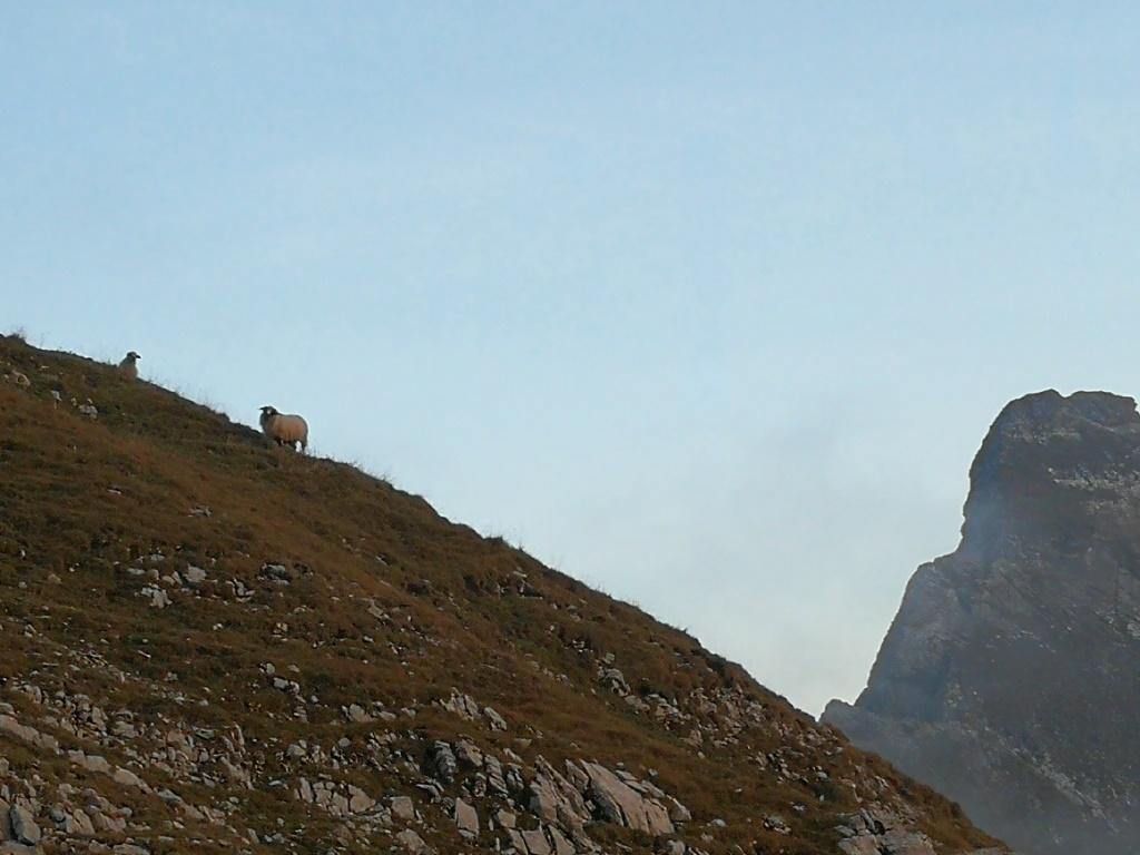 9 mouton