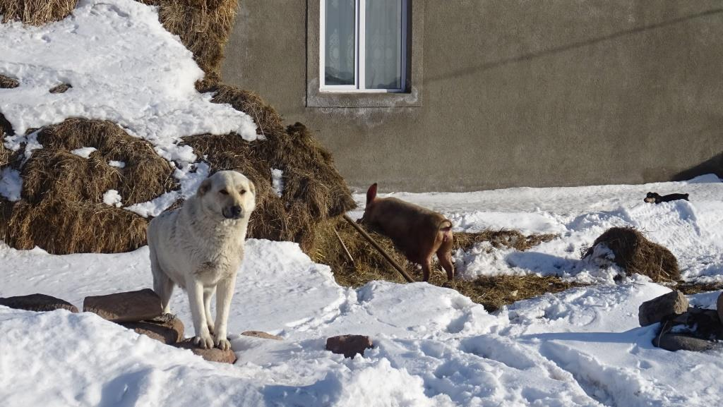 5 Abuli - cochon chien